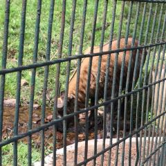 塔金動物園用戶圖片