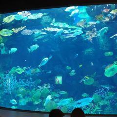 씨라이프 방콕 오션월드 여행 사진