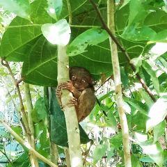 필리핀 타르시에 보호구역 여행 사진