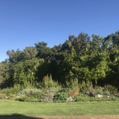 Kirstenbosch Botanical Garden User Photo