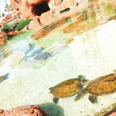 Atlantis Paradise Island User Photo