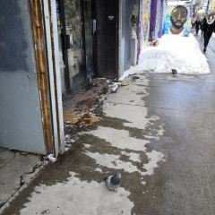 多倫多唐人街用戶圖片