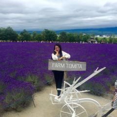Choei Lavender Park User Photo