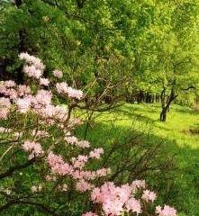 鹿兒島鮮花公園用戶圖片