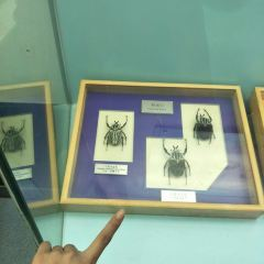Northwest A & F University North Campus Insect Museum User Photo