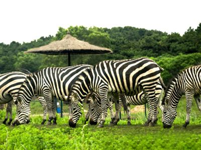 瀋陽森林動物園