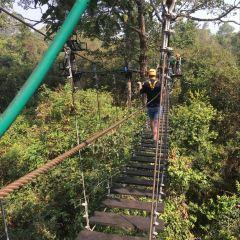 Flight of the Gibbon User Photo