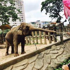 사이공 동물원 여행 사진