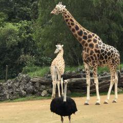 奧克蘭動物園用戶圖片