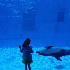 Port of Nagoya Public Aquarium User Photo