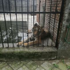 Baoding Zoo User Photo