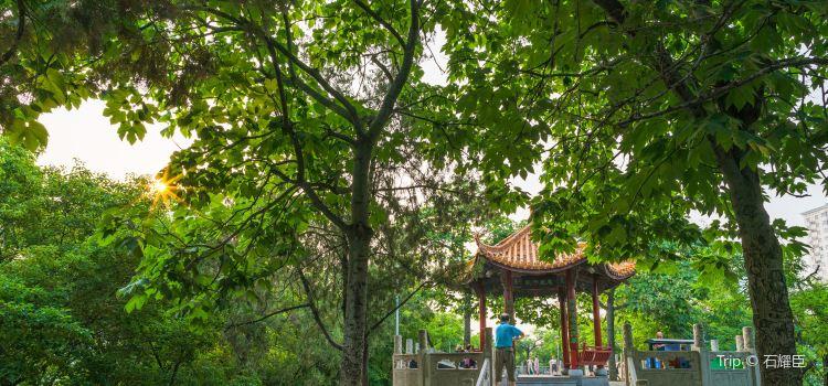 紫荊山公園2