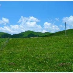 紅原—若爾蓋大草原用戶圖片