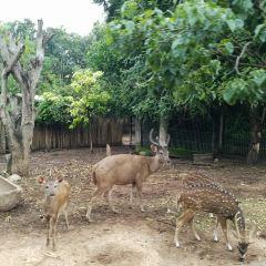 The Chiang Mai Night Safari User Photo