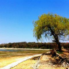 Dendrarium Park用戶圖片