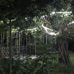 大樟樹農家飯用戶圖片