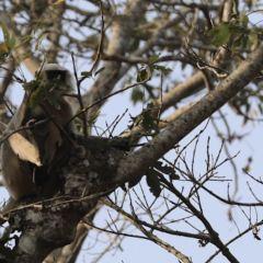 Chitwan National Park User Photo
