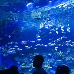 Rizhao Ocean Park User Photo