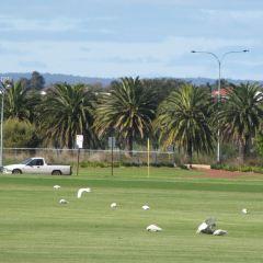 Perth Museum User Photo