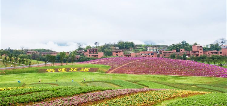 Xinglong Sea of Flowers3