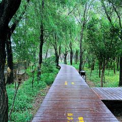 Haibin National Forest Park User Photo