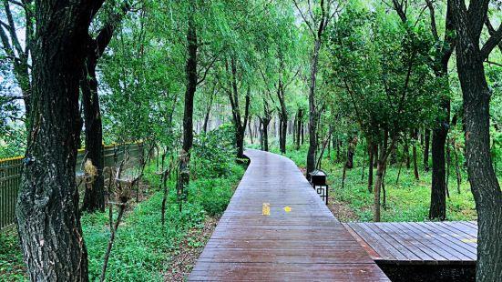 Haibin National Forest Park