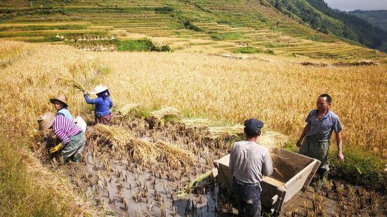 Shengcun