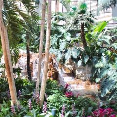 Siegfried & Roy's Secret Garden & Dolphin Habitat User Photo