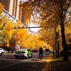 Qixiayuan Park User Photo