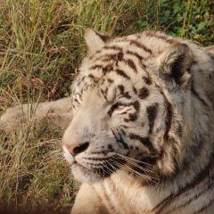 上海野生動物園用戶圖片