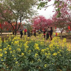 Zhenjiang Cherry Park User Photo