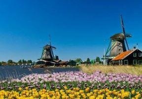 荷蘭的春天綻放不只有鬱金香,還有讓你目不暇接的美景!