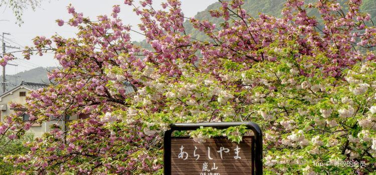 Arashiyama1