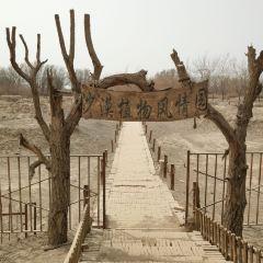 沙漠植物風情園用戶圖片