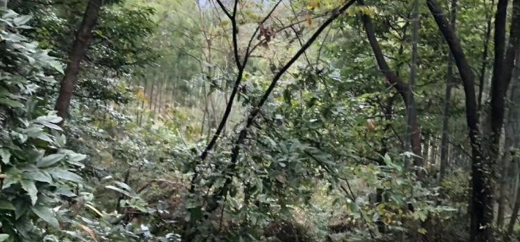 山溝溝景區1