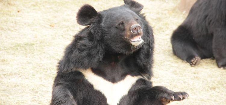 亞洲黑熊展區2