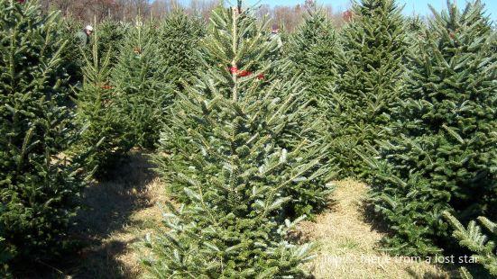 Hillside Christmas Tree Farm