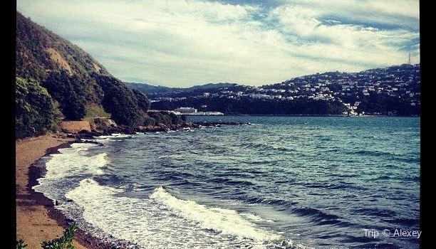 Shelly Bay2