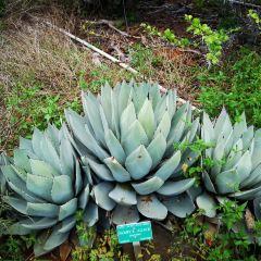 코코 크레터 식물원 여행 사진