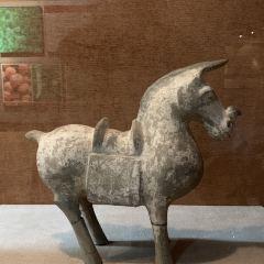 鄴城博物館用戶圖片