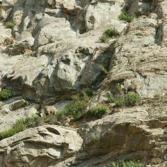 賀蘭山岩畫用戶圖片