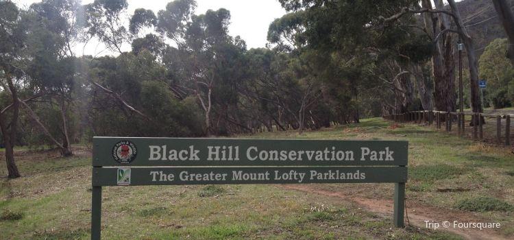 Black Hill Conservation Park2