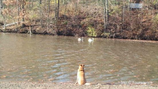 Mill Pond Dog Park