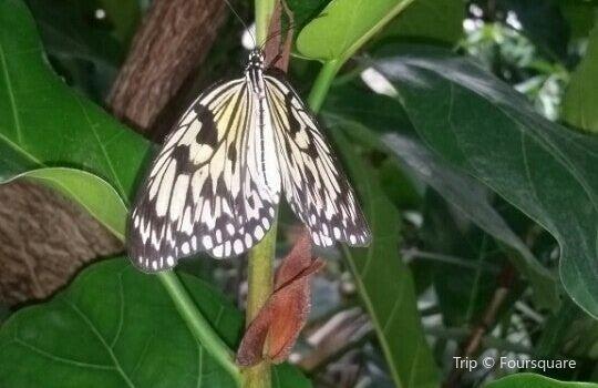 Schmetterlingspark3