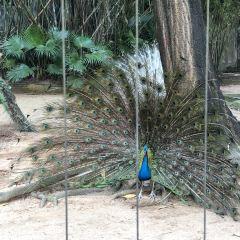 深圳野生動物園用戶圖片