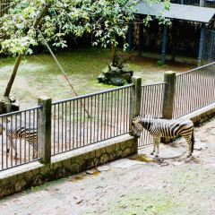 杭州動物園用戶圖片