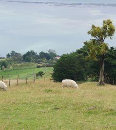 基督城游记图文-南半球的夏天--- 澳大利亚 悉尼/纯净新西兰 环南岛自驾游