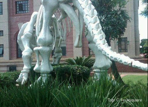 川斯華自然曆史博物館3