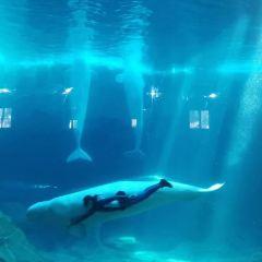 神秘園與海豚館用戶圖片