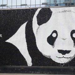 天府熊貓塔用戶圖片